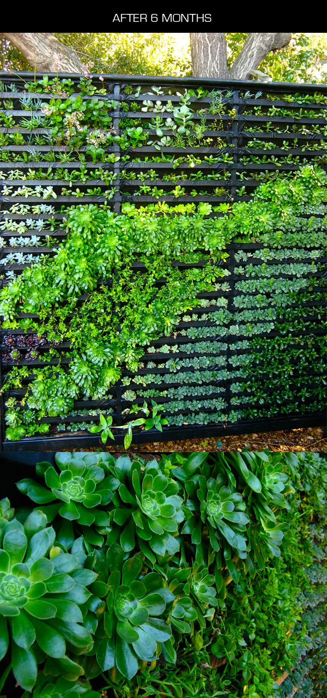 "Amazing ""Living Wall"" of succulent plants - here's a full tutorial to help you create your own little green oasis of calm nature Zen, in just the very little space it takes for a section of privacy fence."