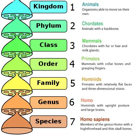notes on taxonomy bacteria Taxonomy is a branch of biology concerned with the grouping and naming of organisms species - consist of a group of individuals that can breed and produce fertile offspring genus - consists of a group of closely related species.