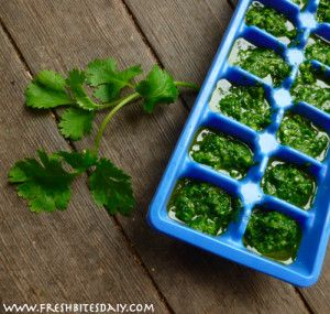 PRESERVE your cilantro - freeze pureed cilantro ,2 cups cilantro, loosely packed, 3 cloves garlic,3-4 tbsp. lime or lemon juice, 1/4 cup olive oil, 1/4 tsp. sea salt  1/8 tsp. cayenne pepper  - in trays or flat sheets to break off pieces as needed