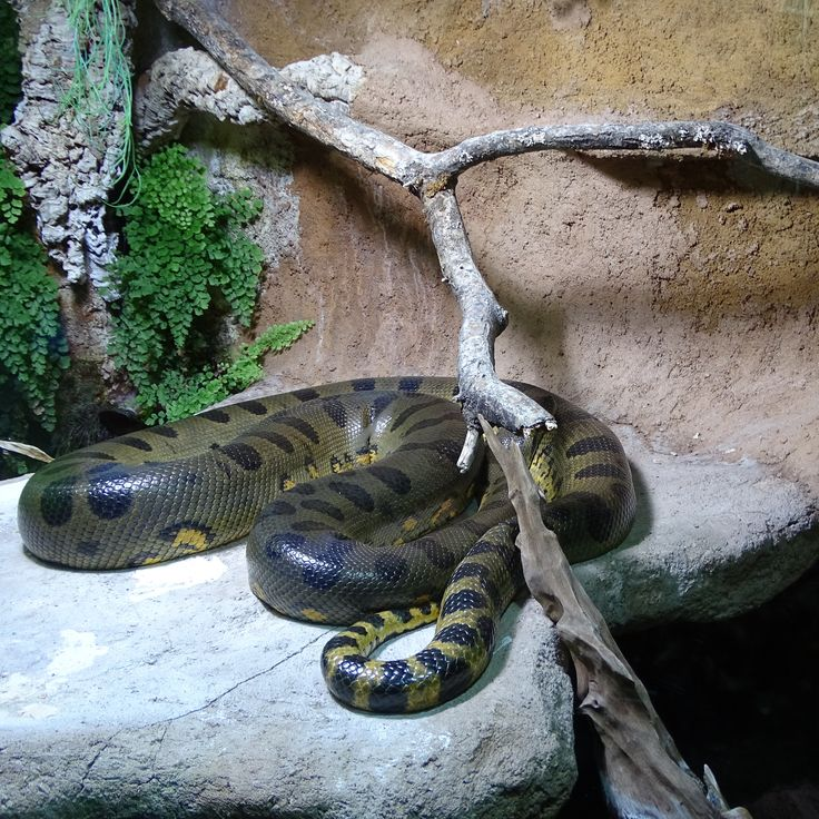 munich | germany | münchen | deutschland | hellabrunn | grüne anakonda | green anaconda | anakonda