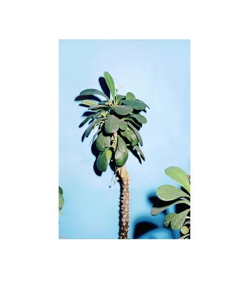 "This looks like a ""Jade Plant""......MarkPeckmezian"