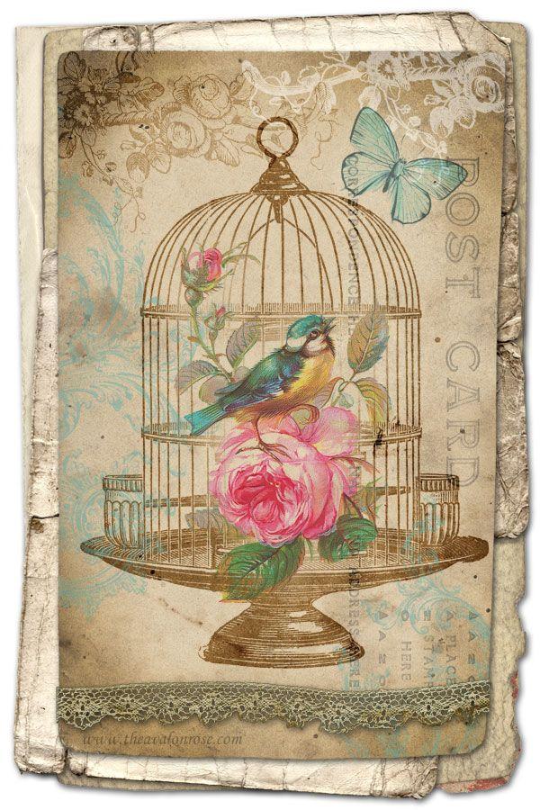 Free Printable Vintage Bird Art Card - from Avalon Rose Design Blog #socialmedia for your blog valentine art?