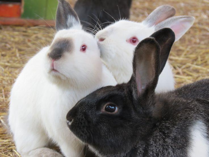 ¿Sabías que algunos animales, incluyendo lo conejos ayudan a mejorar la autoconfianza y las habilidades sociales en los niños?