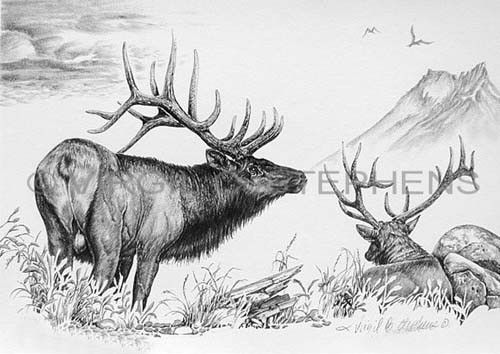 Pencil Drawing Western Art Fine Art Print Elk Wildlife Art