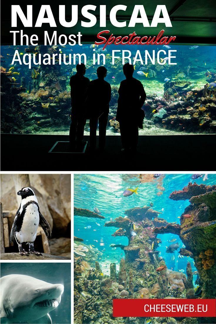 The NAUSICAA Aquarium, in Boulogne-Sur-Mer, Nord-Pas-de-Calais, is France's largest aquarium.