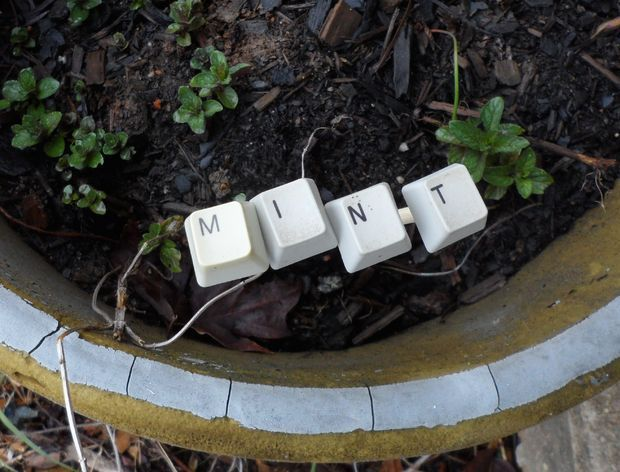 Identifique suas plantas com peças de teclado #diy #keyboard #teclado #reciclar #reaproveitar