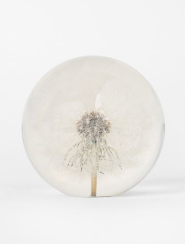 Large Dandelion Paperweight