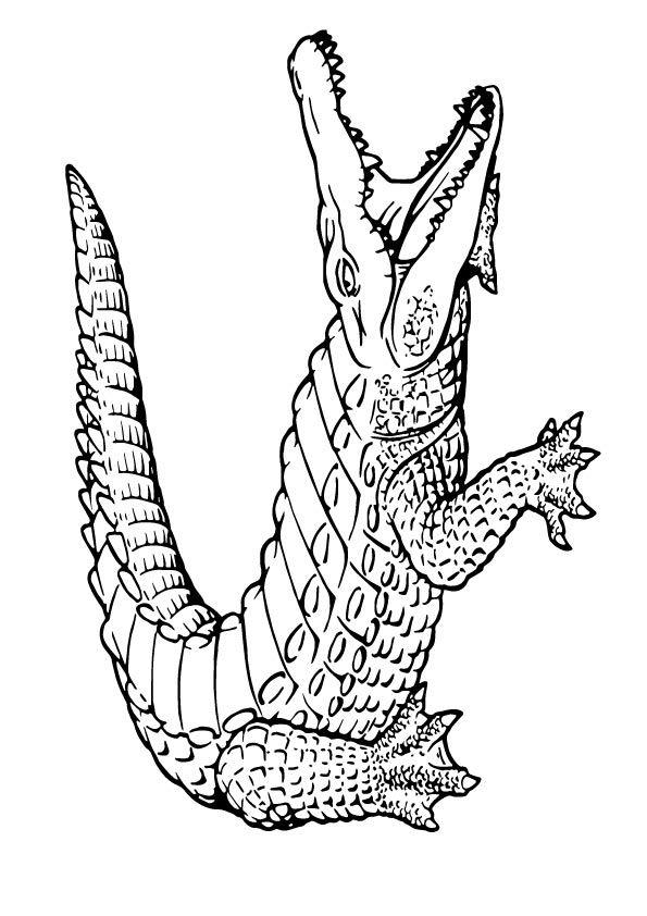 Print Coloring Image Momjunction Coloring Pages Alligator Tattoo Crocodile Illustration
