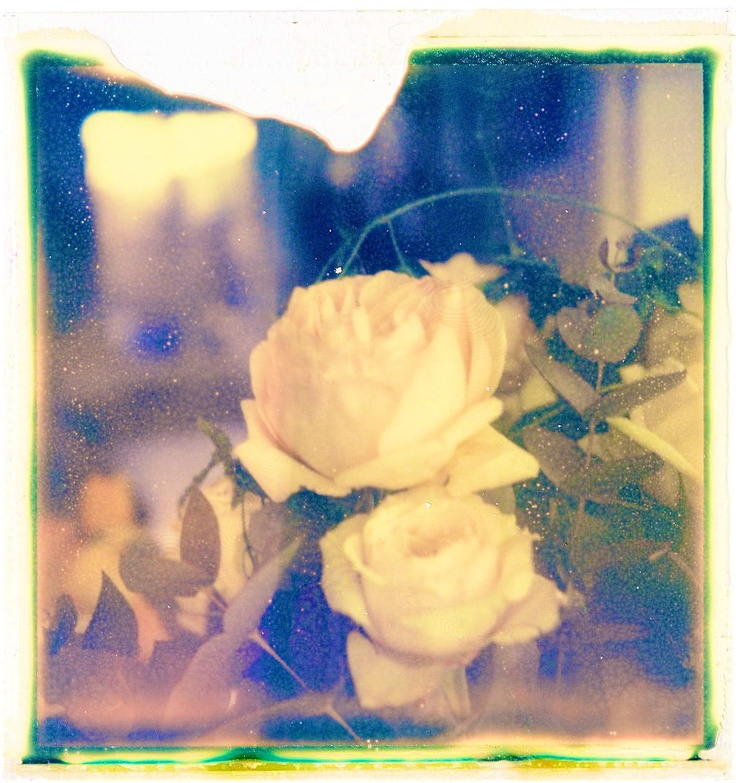 Roses, photo Hania destelle