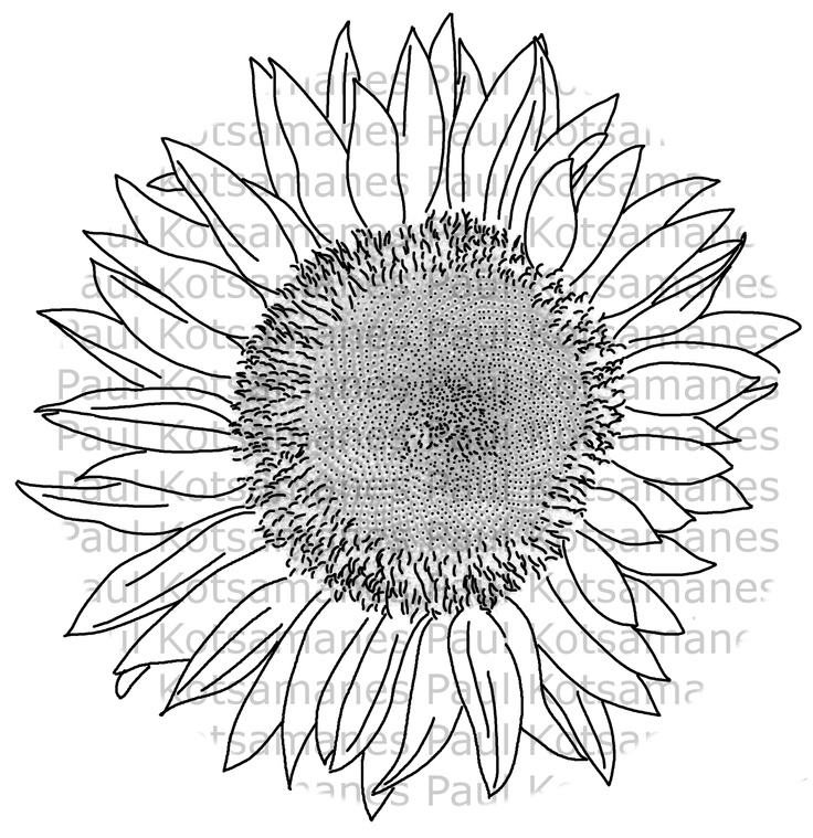 Digital stamp of a sunflower, from my back yard.