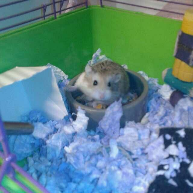 Oh No The Human Caught Me Hamster Cute Hamsters Hamster Names