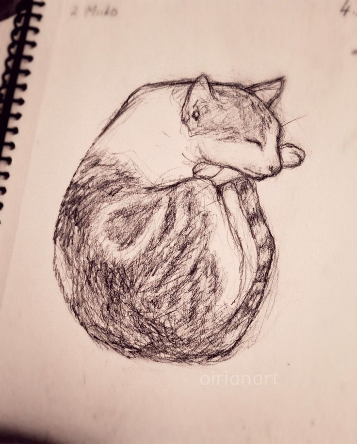 My other cat Miiko. Had to draw him fast since this cute little shit refuses to stay still even in his sleep 🙄