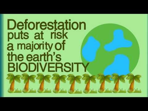What is Deforestation? - YouTube