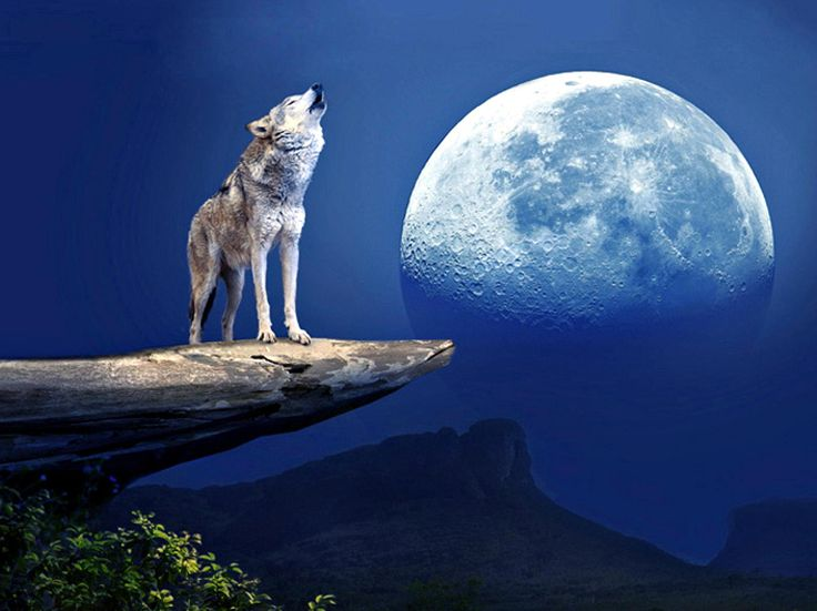 Cool Anime Wolf Wallpapers  Anime Wolves