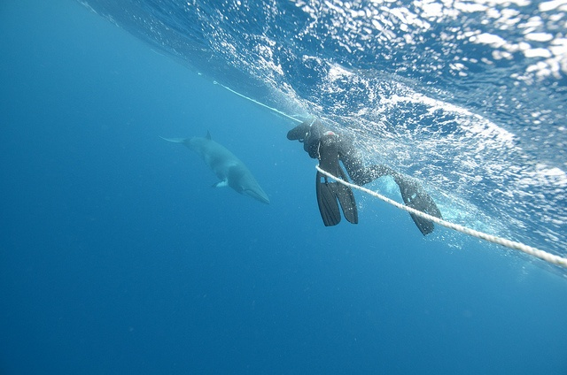 Swim with minke whales on the Great Barrier Reef #bucketlist