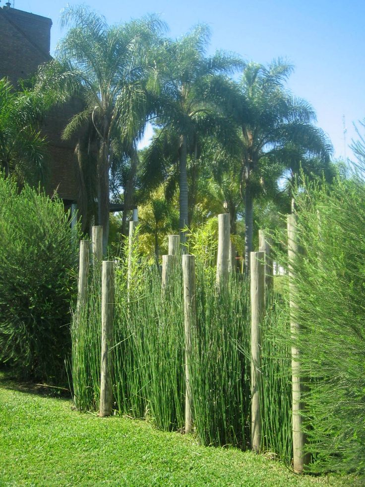 21 best cercos images on pinterest bamboo fence for Arbustos de jardin