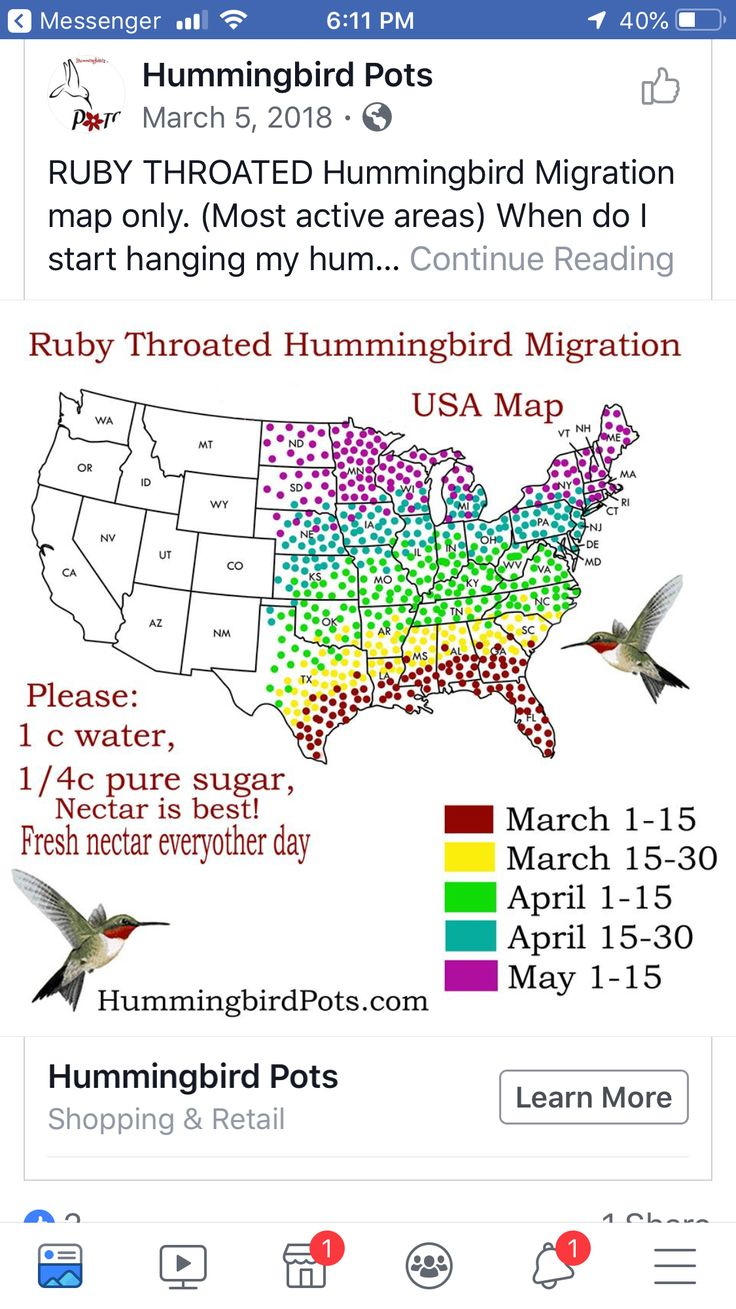 Pin by Barbara Mergist on Hummingbird (With images