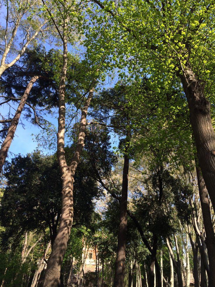 Başım köpük köpük bulut, içim dışım deniz,  Ben bir ceviz ağacıyım Gülhane Parkı'nda... Nazım