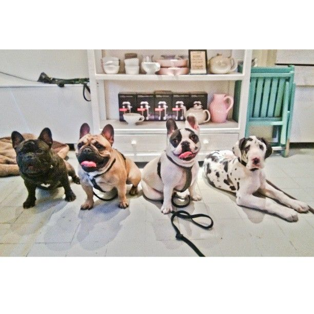 Four friends gathered together at a dog café in Stockholm