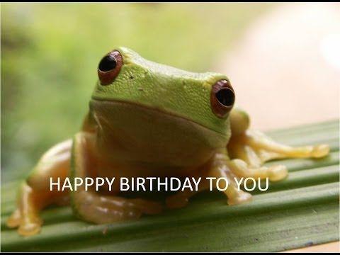 Happy Birthday to You - Tango the Tree Frog - YouTube