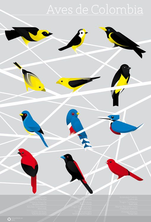 12 illustrations, by artist Camilo Carmona (inspired by various bird species native to Colombia)