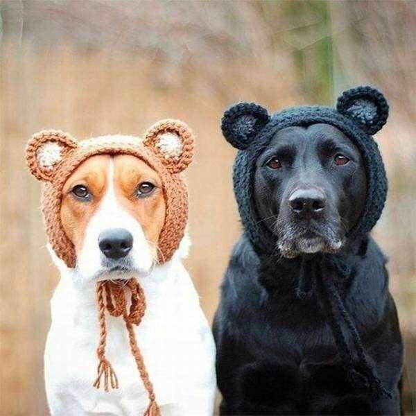Bears in the forest  Follow us on: - https://goo.gl/NKk858 - Twitter: https://goo.gl/PlLXiR - Pinterest:https://goo.gl/9NIzFX - Facebook:https://goo.gl/Y7XnNU  #campingwithdogs #instacat #takemecamping#dogsofinstgram #dachshundpuppy#dachshundoftheday #dachshundsofig#dachshundsonly #dachshundworld #puppyoftheday#puppies #labstagram #labs_of_insta #dogsofficialdog #corgisofinstagram #cockerspaniel #mydog#russianminiatures #pets #petsagram #dogsofinsta#dogselfie #puppy #terrier #Dogsofinsta…