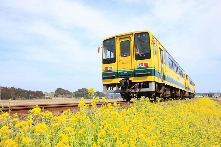 いすみ鉄道 菜の花列車  Izumi Line Nanohana Train