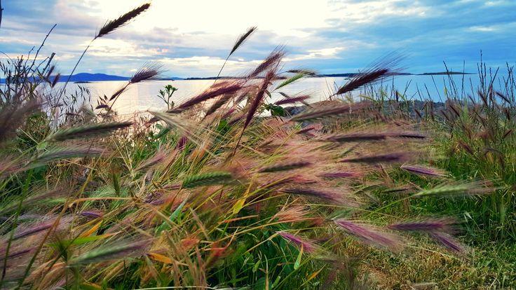 Oak Bay Marina (Victoria, BC Canada) #oakbaymarina #travel #naturephotography #photography #wanderlust