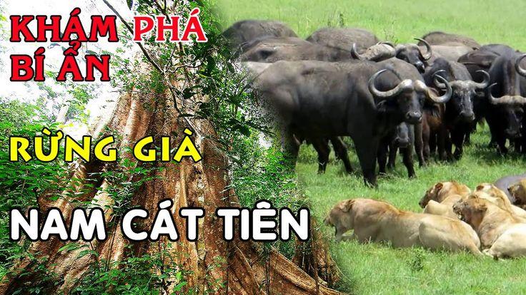 Khám phá bí ẩn rừng già Nam Cát Tiên - National Parks Cat Tien
