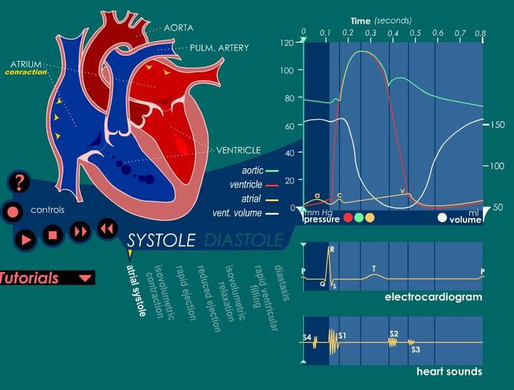 Animation detailing bloodflow, aortic/ventricular volumes and pressures present in a normal cardiac cycle