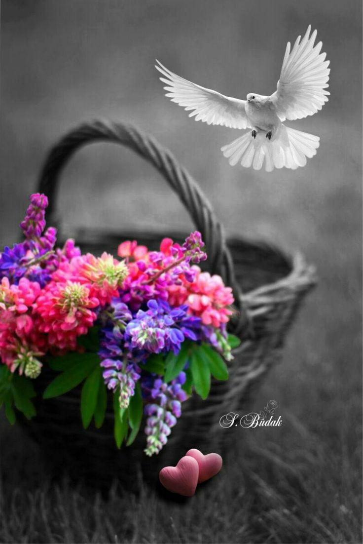 Black White Photos And Color Splash Beautiful Pictures Inspirational Pics Friend Art Flowers Cheese Colours
