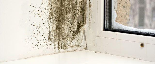 Alle de gode rengøringstips i og omkring boligen. Vi har masser af gode ekspertråd, til hvordan du nemmere og smartere gør rent i din bolig.