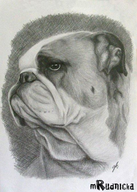 made july 2006 it took me made using pencils portrait english bulldog