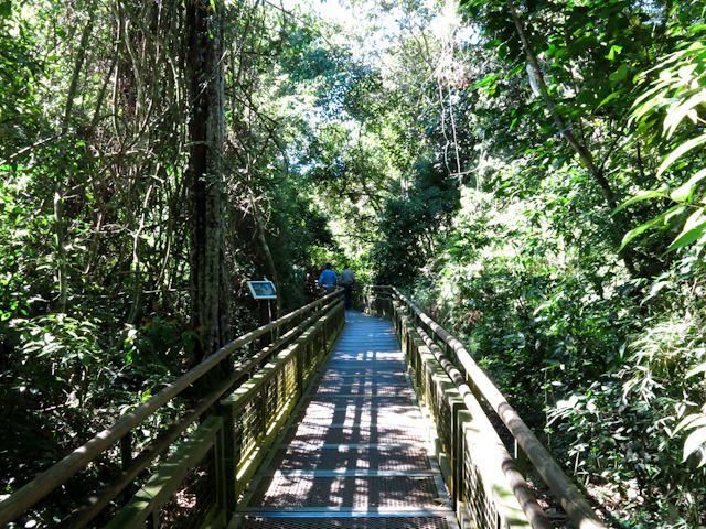 Entouré par la nature dans les sentiers des chutes d'Iguazu en Argentine en Amérique du Sud