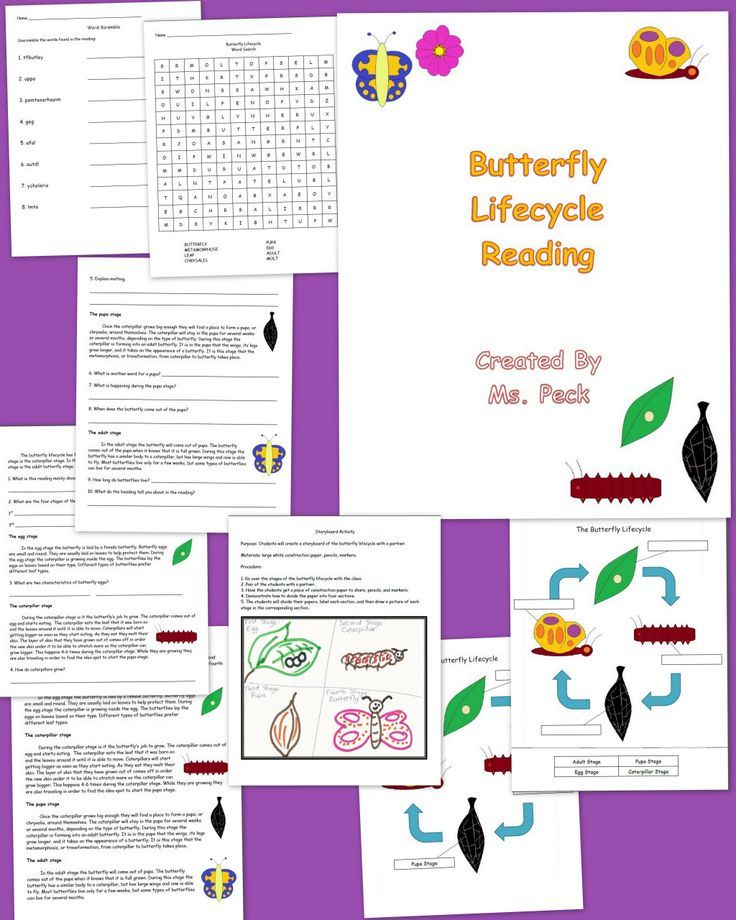 An informational reading about the butterfly lifecycle. Includes butterfly lifecycle reading – color, butterfly lifecycle reading – b & w, text questions, questions in text reading – color, questions in text reading – b & w, storyboard activity, lifecycle poster/handout – color, lifecycle cut, paste, and label – color, lifecycle poster/handout – b & w, lifecycle cut, paste, and label – b & w, word Scramble, word search.