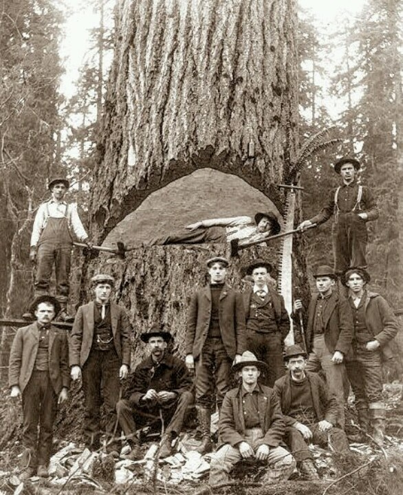 Vintage logging history photos pinterest