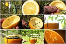 usos de naranjas