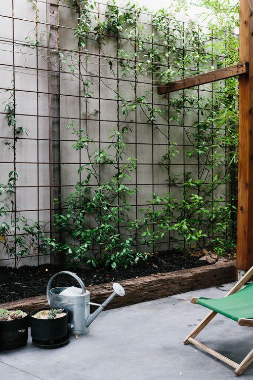 Yarraville-31.jpg  Steel reinforcing concrete, vertical garden, jasmine plant, creeper.