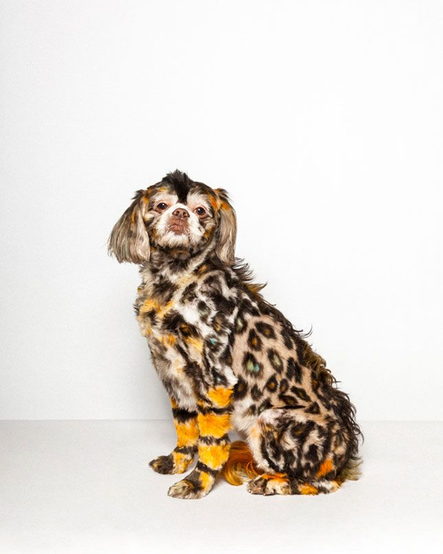 You've never seen dog grooming like THIS before.