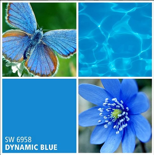 Sherwin-Williams paint color - Dynamic Blue (SW 6958)