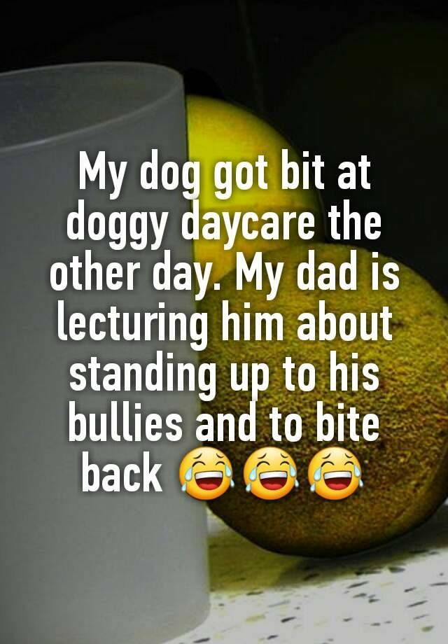 """""""My dog got bit at doggy daycare the other day. My dad is lecturing him about standing up to his bullies and to bite back """""""