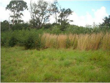 Vacant Land For Sale in Mooi River | Wakefields Estate Agents