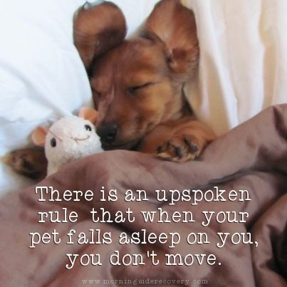 18 best images about Pets Are Recovery Sidekicks! on ...