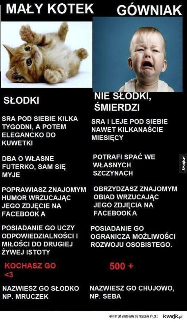 Mały kotek vs. gówniak