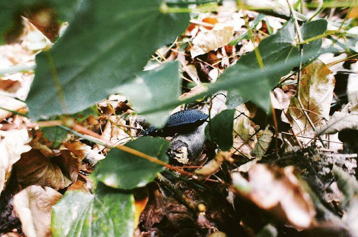 #istanbul #iett #organiktur #istanbulunkoyleri #karadeniz #blacksea #sariyer #ataturkarboretumu #naturelovers #natureaddict #yoldanciktim #istanbul #forest #bug #insect