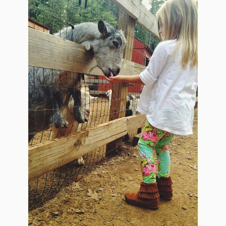 The Double Fringe Side Zip Boot, perfect for any adventure your kid goes on, even feeding goats! via Melissa Cole   EllaBrooks Blog