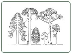 Image result for tree drawing francis halle