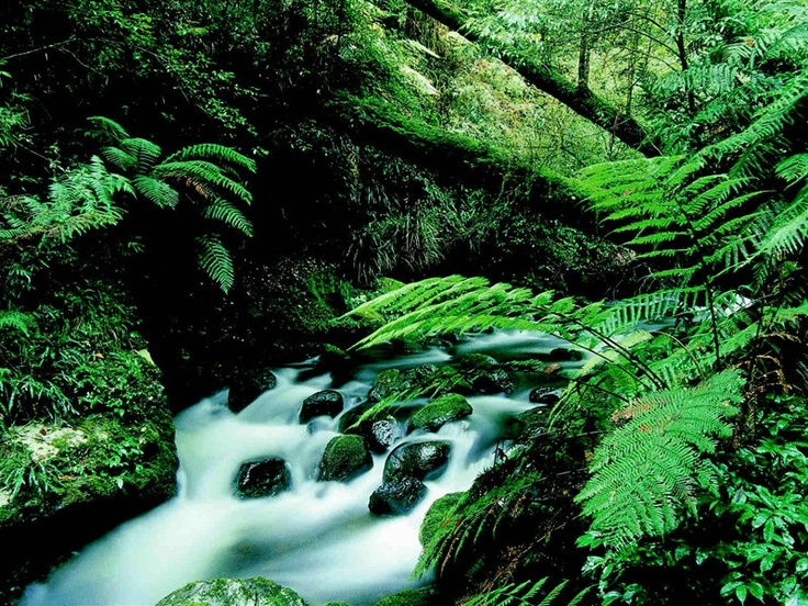 National park in NSW