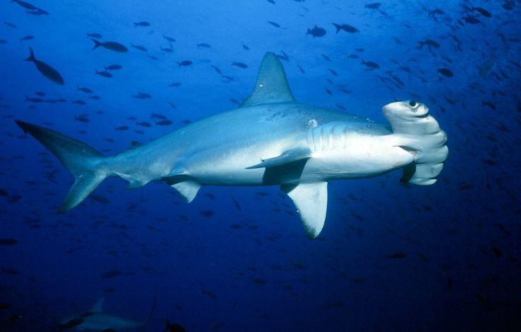 SharksDeepTrouble-06.jpg (1140×727)