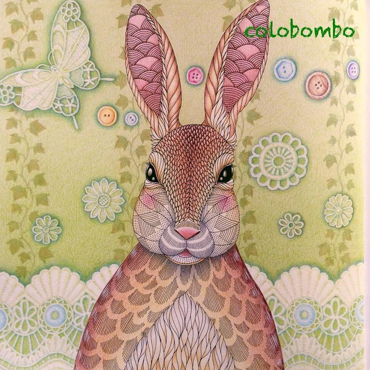 Image Result For Animal Kingdom Coloring Book Rabbit